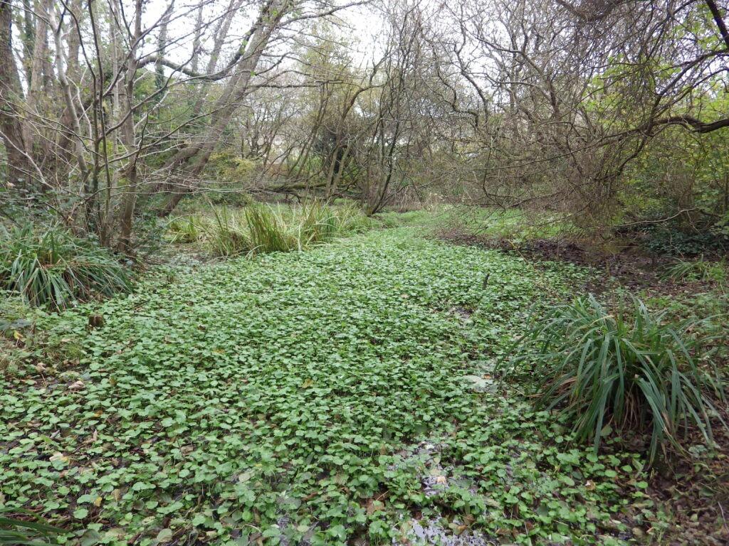 Tincombe Pond